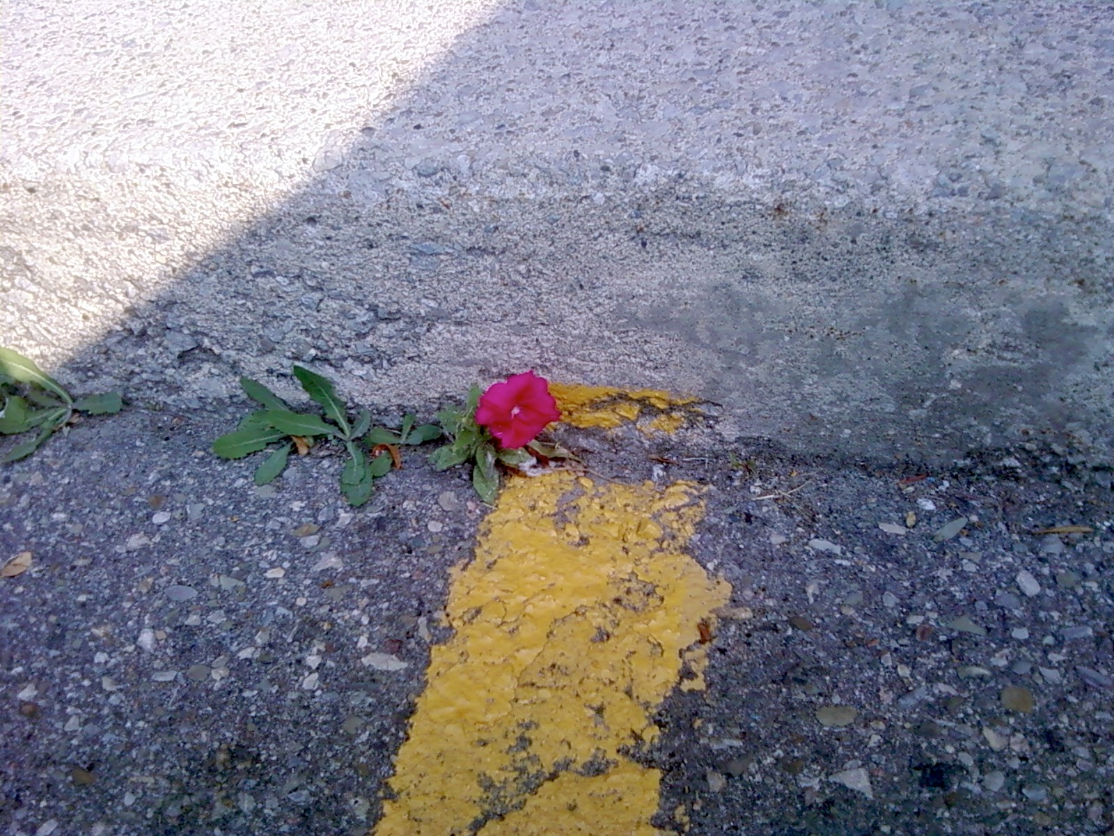 The Oak and the Rose: Grow Up, But Don't Look Down | What